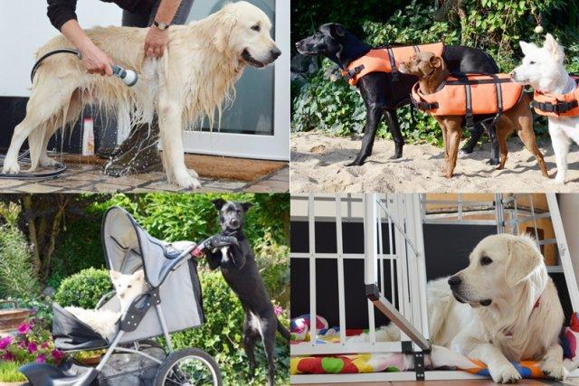 0579-07 Ferienwohnung-Hundeglueck-Family-Hundeausstattung-1