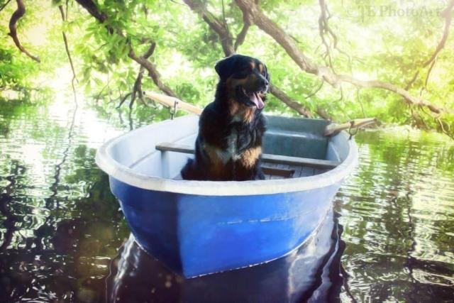 0582-04 Naturcampingplatz Springsee Hund im Boot
