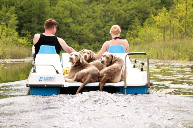 0582-05 Naturcampingplatz Springsee Tretboot mit Hunden