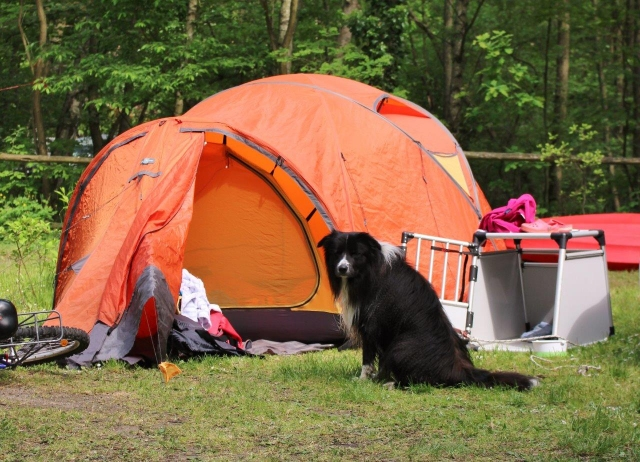 0582-07 Naturcampingplatz Springsee Zelt mit Hund