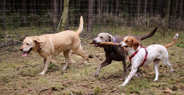0582-10 Naturcampingplatz Springsee Hunde im eingezaeunten Freilaufgelaende