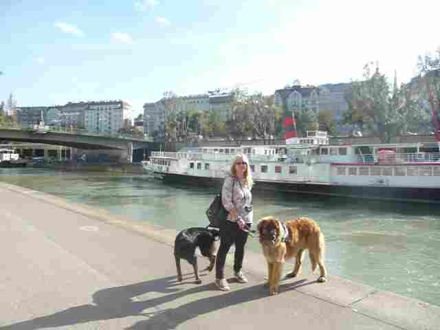 Mit Hunden am Donaukanal
