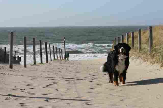 0595-01-Ferienhaus-Asja-Hund-am-Strandaufgang