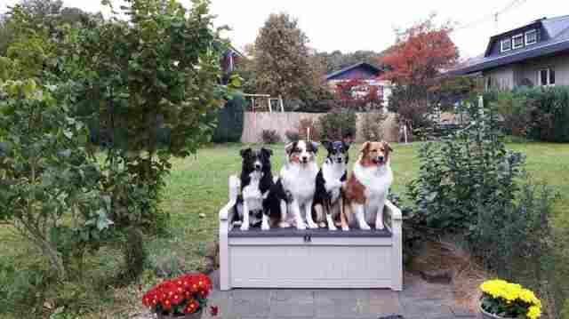 0597-02-Ferienhaus-Lochum-4-Hunde-auf-Bank