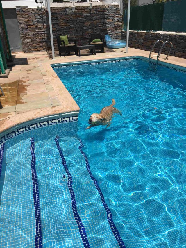 0601-03-Golf-Villa-Andalusien-Pool mit Hund