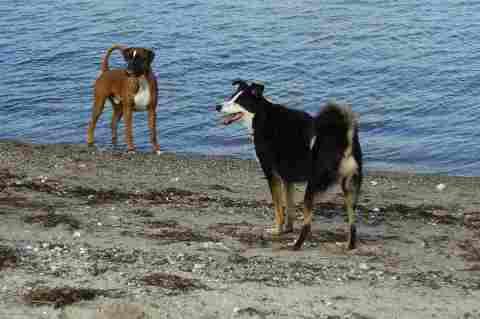 Lolle und Willy an der Ostsee
