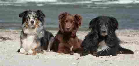 Trio am Strand
