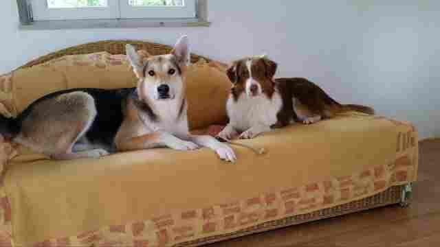 0602-01 Ferienhaus Zamperl Hundesofa im Hundezimmer