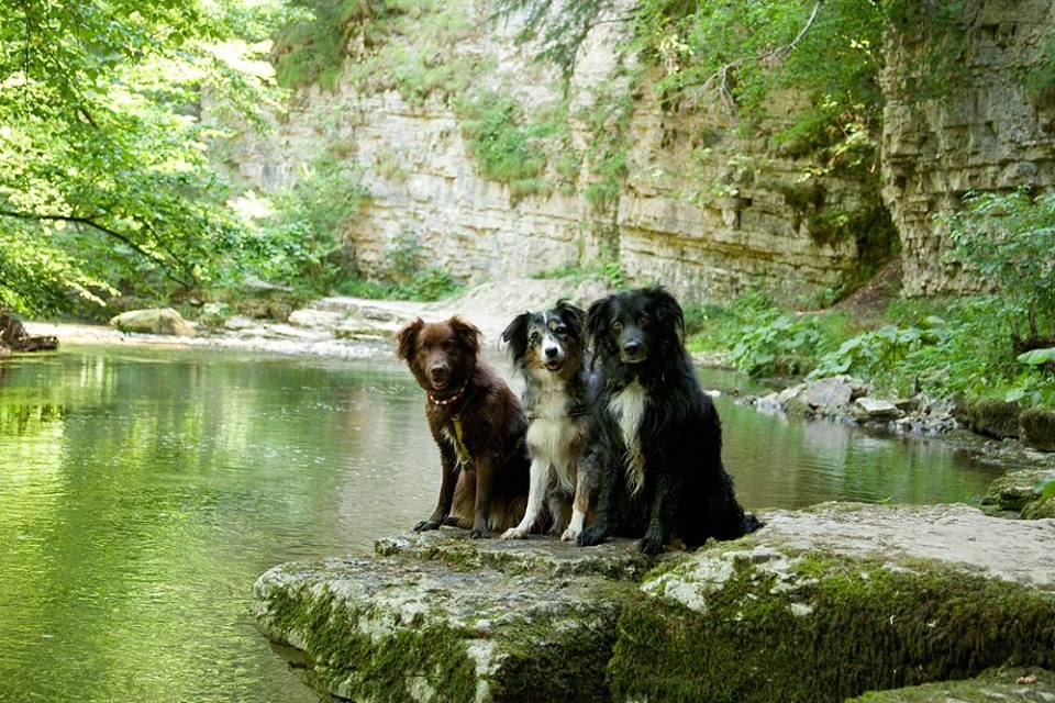07 Angela Münzel-Hashish Piper, Yasha und Wolf in der Wutachschlucht