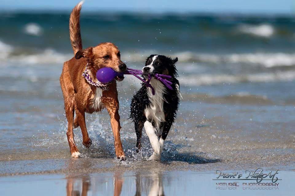 08 Annika Gramatzki Enny und Morgan spielen am Schöneberger Strand Ostsee