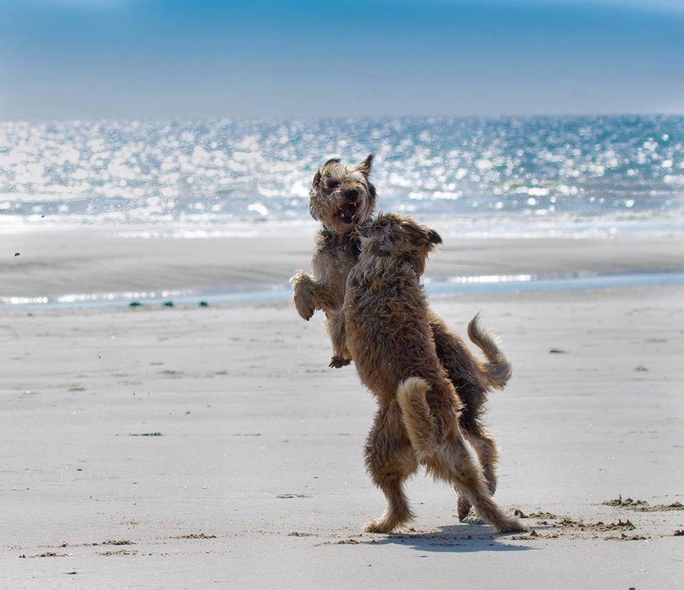 09 Uschi Swiderski Cheyenne und Gira am Strand der Normandie