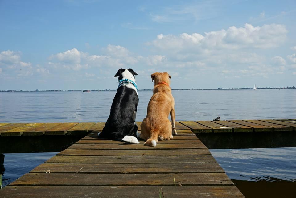 10 Sonja Blank Amy und Nika auf einem Bootsanleger