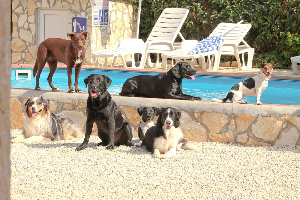 Platz 08 Andrea Cresnoverh - Lucy -  Ares - Laika - Rucky - Aron - Nando und Maleika am Pool in Kroatien