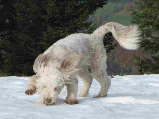 steinschalerhund106317
