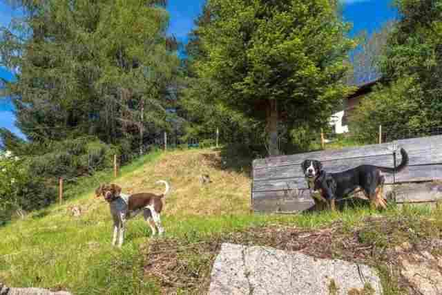Garten mit Hunden