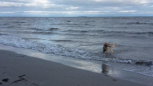 Hund in der Ostsee