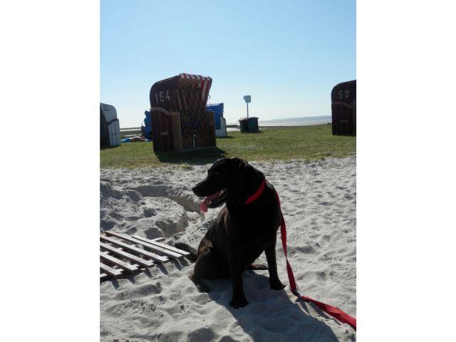 0638-02 Ferienwohnung Fietje Hund am Strand