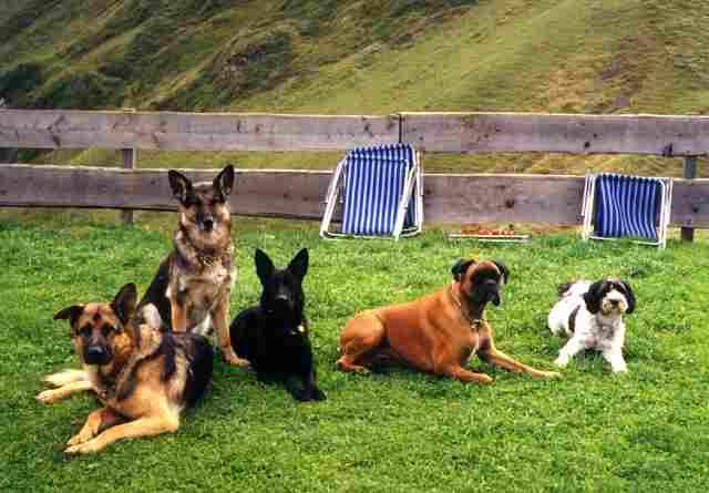 5 Hunde