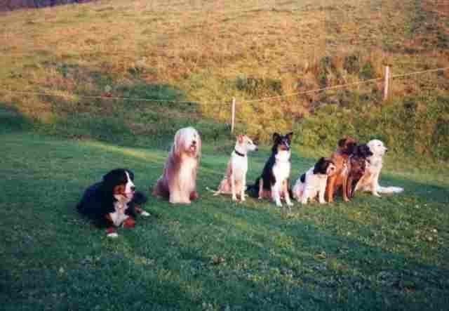 6 Hunde