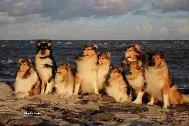 9 Hunde am Meer