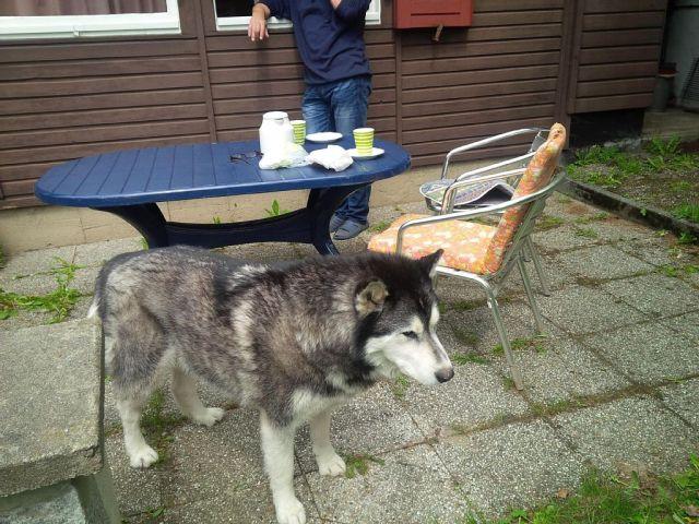 0677-04-Ferienhaus-Balto-Haustiere-willkommen