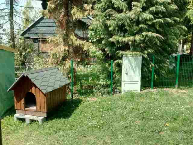 0677-18-Ferienhaus-Balto-Hundehütte