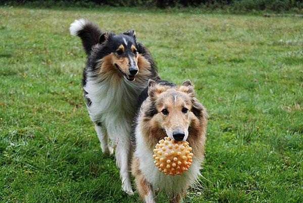 0711-02 Am Rennweg Hunde beim Spiel