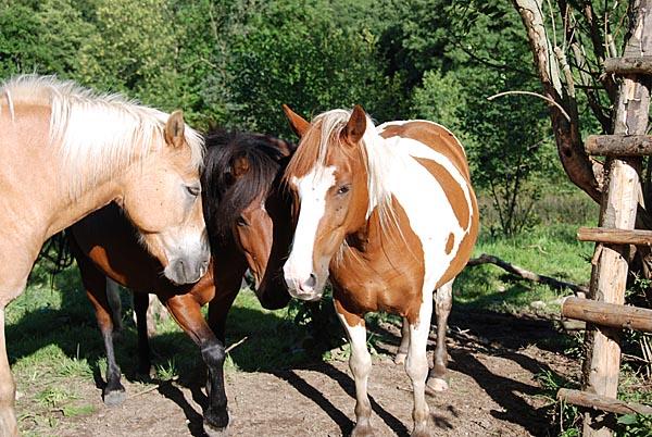 0711-20 Am Rennweg Pferdegruppe