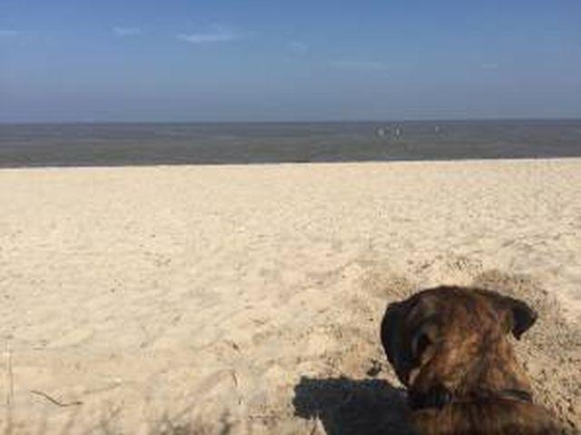 Hundestrand in Schillig