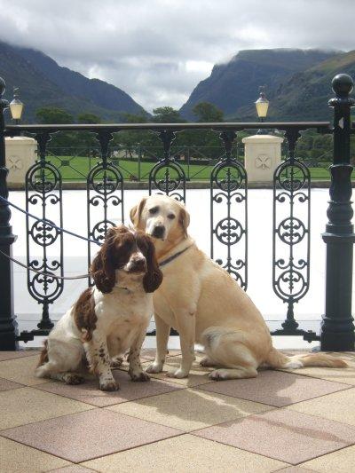 0397-03-Hotel-the-Dunloe-Hunde-auf-der-Terrasse