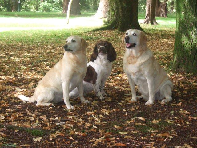 0397-03 Hotel the Dunloe Hunde im Garten