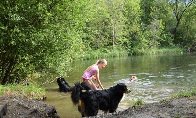 0743-08 Camping Rosental Roz Hunde am See