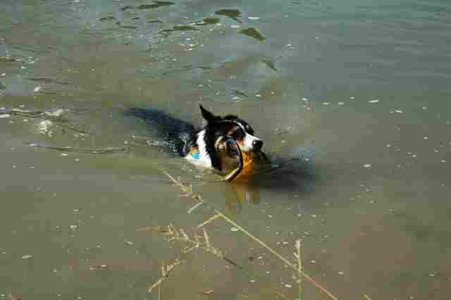 0750-14 Tanya Boroka Hund im Wasser