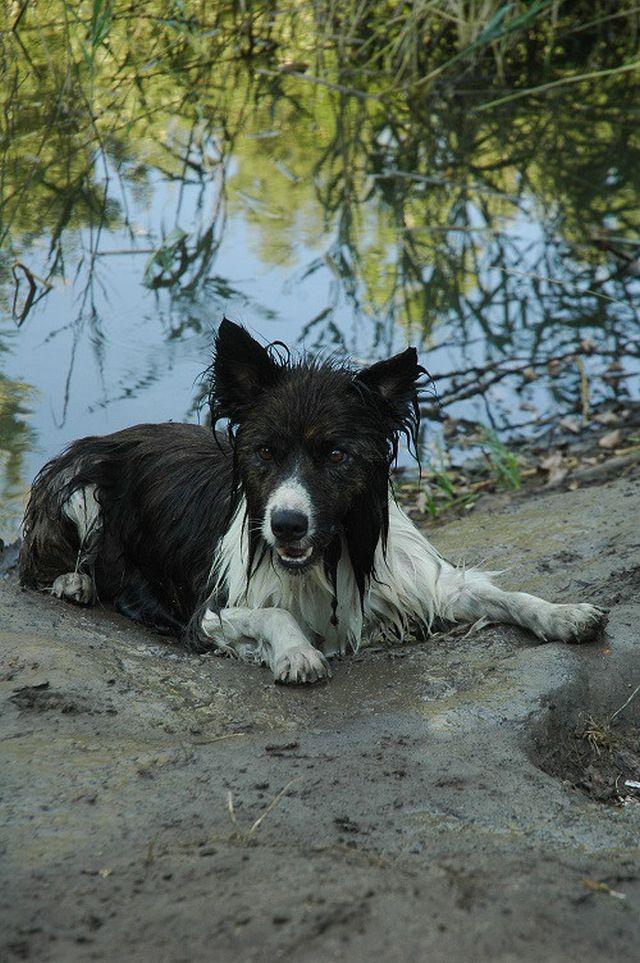 0750-15 Tanya Boroka Hund am Strand