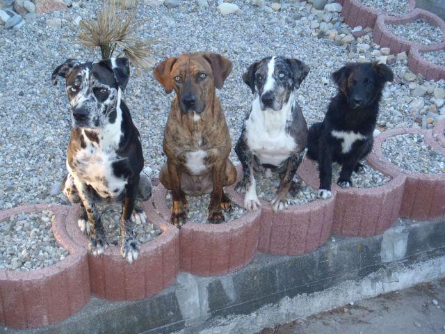 0756-09 FeWo Schlossblick die Haushunde