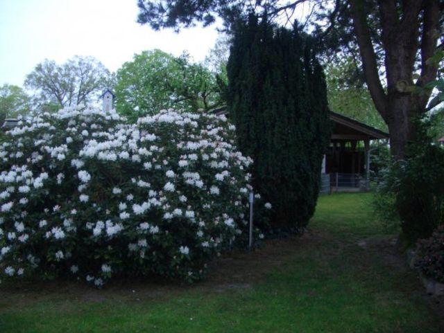 0758-02 Ferienhaus Emsland Garten