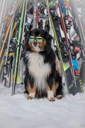 Joshi macht Skiwachtdienst