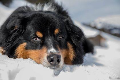 Joshi liegt im Schnee