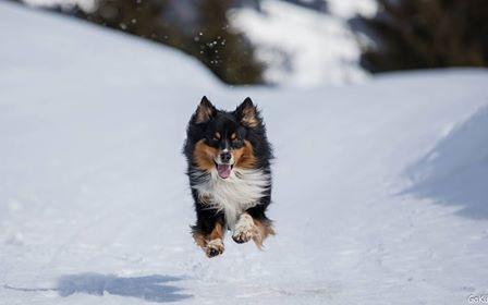Joshi tobt im Schnee