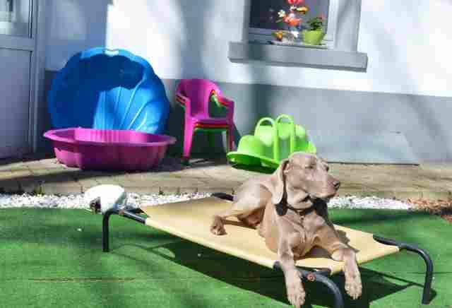 0753-04 Ravel-Inn Hund auf Liege