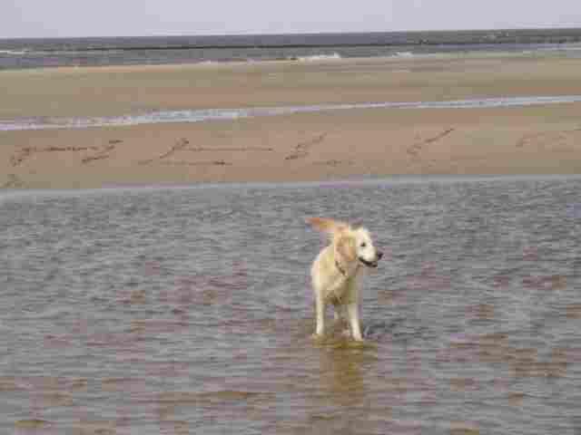 0773-01 Ferienhaus Strandperle Hunde am Strand