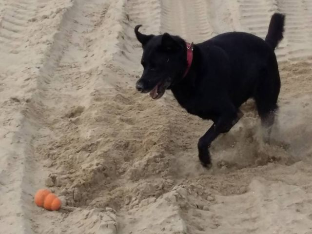 0773-02 Ferienhaus Strandperle Hund am Strand