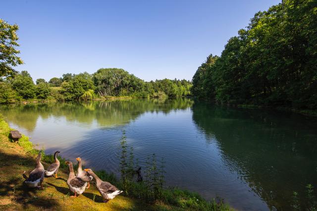 0777-03 Villa Farm Garten mit Teich