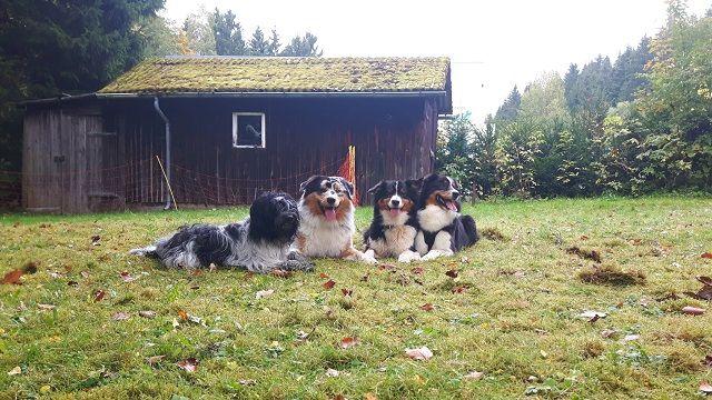 0785-04 Villa Familienglueck Hunde im Garten