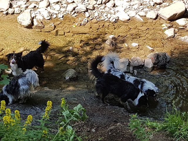 0785-16 Villa Familienglueck Hunde im Bach