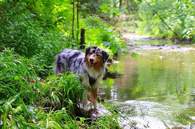 0785-16 Villa Familienglueck Hunde in der Oker