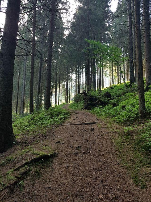 0785-17 Villa Familienglueck Wandern im Wald