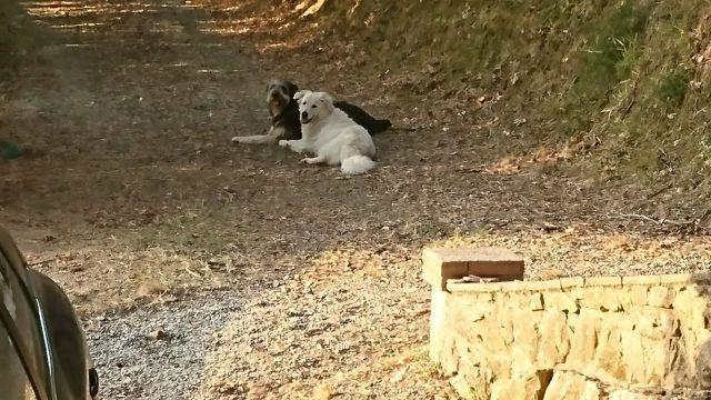 0791-03 Casa Poldo Hunde im Garten