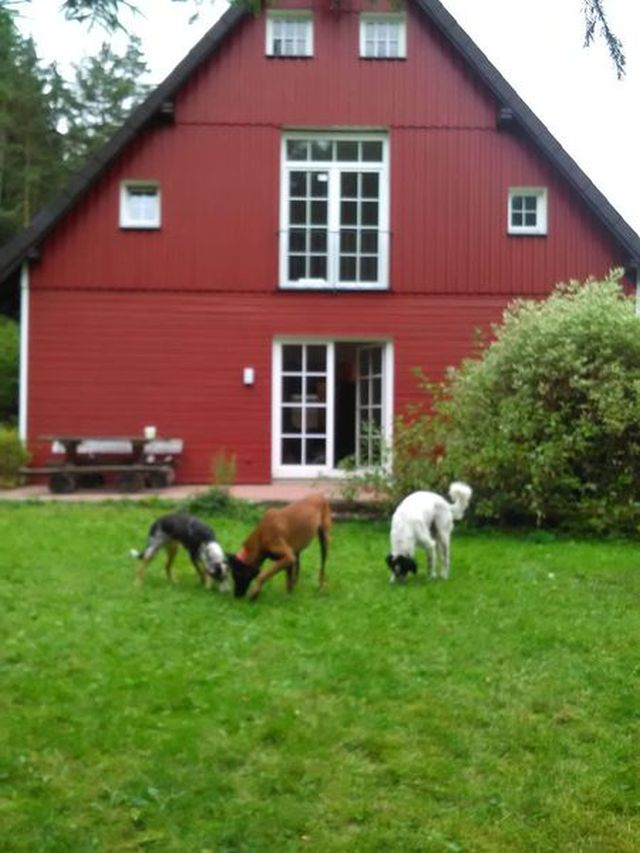 0792-01 Forsthaus Oberharz Haus Sommer
