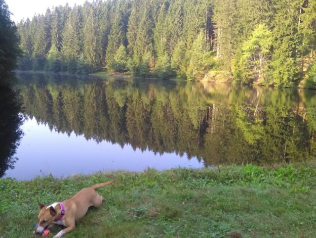 0792-08 Forsthaus OberharzHund am See